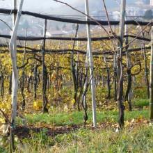 Vigna Prosecco