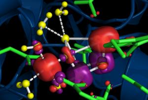 Complesso proteico del  Fotosistema 2 (foto 2) (1)